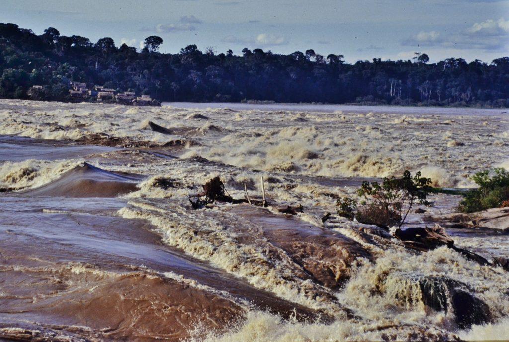生息地の一つ、マデイラ河の雨季