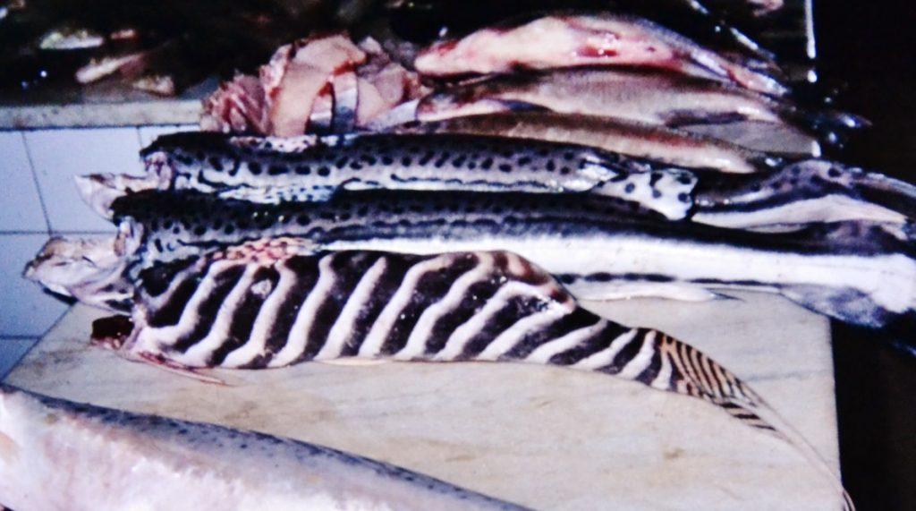 成魚・ポルトヴェリョの市場にて食用にされていた。